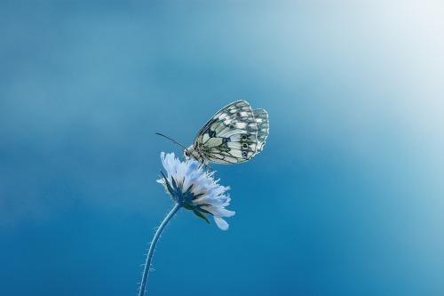 butterfly-1611794_1280.jpg