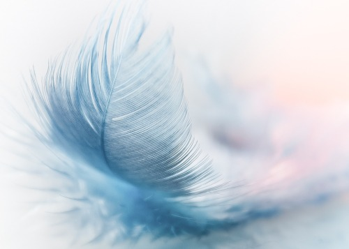 feather-3010848_1280.jpg