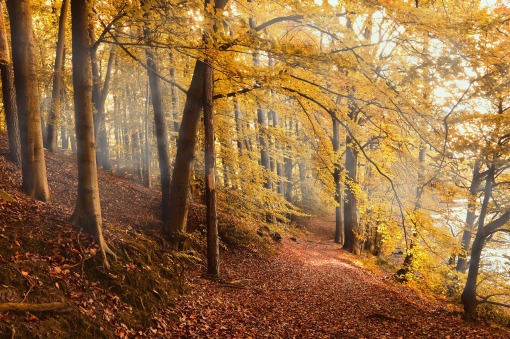 autumn-forest-4561344_1280