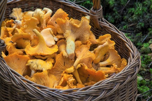 fungus-1194380_1280_2 (3)
